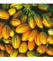 Lilek pruhovaný - prodej semen lilku - 6 ks