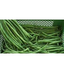 More about Fazol keříčkový Newton - prodej semen fazole - 8 ks