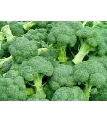 More about Brokolice Leonora - Brassica oleracea - semena brokolice- 100 ks