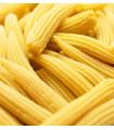 Kukuřice cukrová Tauris F1 - Zea Mays - semena Kukuřice - 6 g