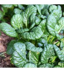 Hořčice salátová Misome F1 - Brassica campestris - osivo hořčice - 20 ks