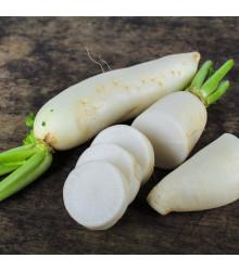More about Ředkev setá bílá - Raphanus sativus - prodej semen bílé ředkve - 1 gr