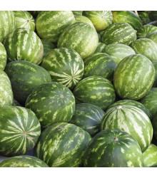 Meloun vodní Sugar baby - Citrullus lanatus - osivo melounu - 7 ks