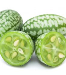 Mexická mini okurka - Zehneria scabra - osivo mexické okurky - 5 ks
