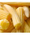 Kukuřice Minipop F1- Zea mays - semena kukuřice - 15 ks