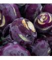 BIO kedluben Noriko - prodej bio semen - 0,3 gr