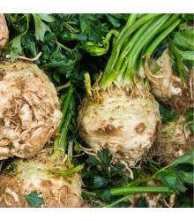BIO Celer bulvový Princ - Alpium graveolens - bio osivo celeru - 20 ks