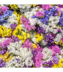 More about Limonka chobotnatá směs barev - Limonium sinuatum - osivo limonky - 80 ks
