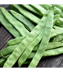 Fazol tyčkový Algarve - Phaseolus vulgaris - osivo fazolu - 20 ks