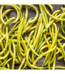 Fazol keříčkový Golddukat - Phaseolus vulgaris - osivo fazolu - 20 ks