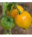 Rajče - oranžová jahoda - prodej semen - 6 ks