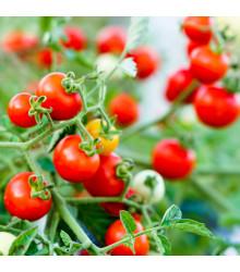 More about Rajče Obří Hrozny - Riesentraube - Lycopersicon Lycopersicum - osivo rajčat - 7 ks