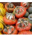 Dýně Císařská čepice - prodej semen dýně - 5 ks