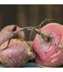 BIO řepa salátová Chioggia - Beta vulgaris - bio osivo řepy - 40 ks