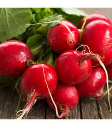 BIO ředkvička červená Sora - Raphanus sativus - bio osivo ředkvičky - 40 ks