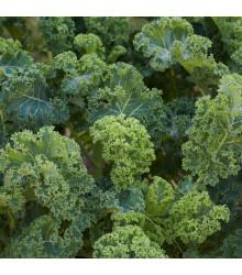 BIO kadeřávek Lerchenzungen - Brassica oleracea L. - bio osivo kadeřávku - 150 ks