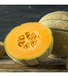 Meloun cukrový Stellio F1 - Cucumis melo - osivo melounu - 6 ks