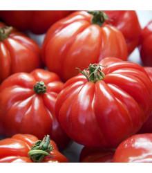 BIO rajče Marmande - Lycopersicon Esculentum - bio osivo rajčat - 15 ks