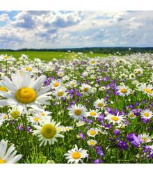 Slunná stráňka - semena lučních květin - 10 g