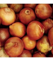 Cibule sazečka Sturon - Allium cepa - cibulky sazečky - 100 g