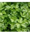 Petržel Amsterodam - Petroselinum crispum - osivo petržele - 1 g