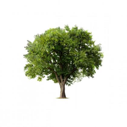 Listnaté stromy, keře